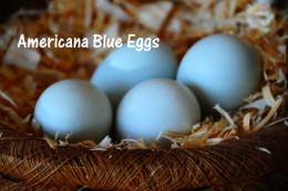 EE eggs