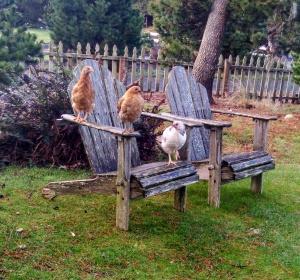 chick seat